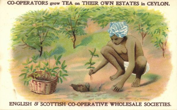 English & Scottish Co-operative Wholesale Societies Packet Teas (1910s) Postcard