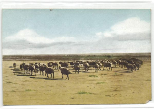 mongolia, Sheep Flock in the Steppe (1946)
