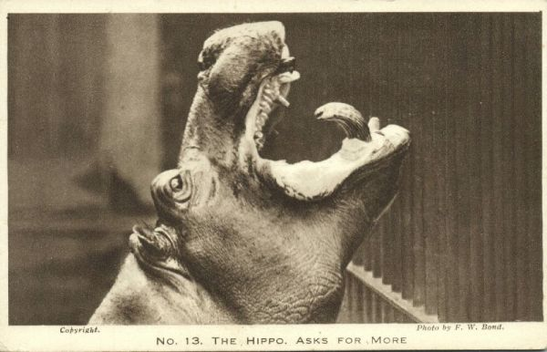 london, Zoo Zoological Gardens, Hippo Hippopotamus Asks for More (1930s)