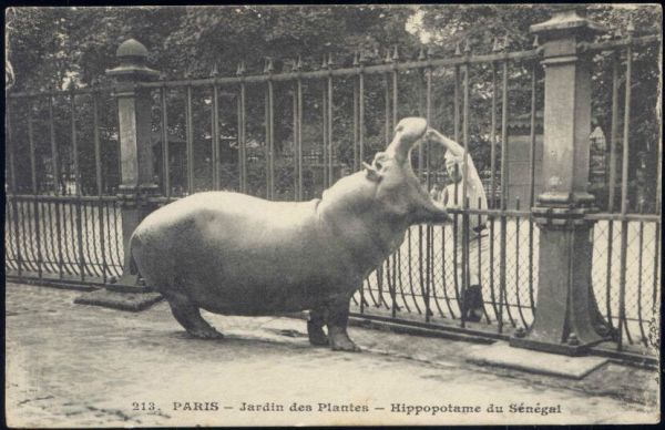 france, PARIS, Jardin des Plantes, Hippo Hippopotamus of Senegal (1914) Stamp