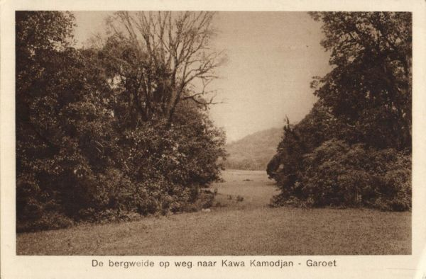 indonesia, JAVA GAROET, Mountain Meadow on the Way to Kawah Kamodjan (1929)